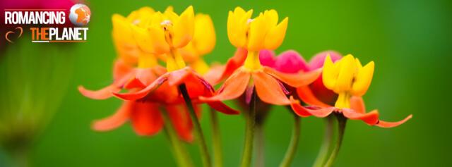 Beautiful flowers in Thekkady, Kerala