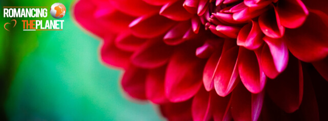 Macro photography of flowers during my travel in Kerala