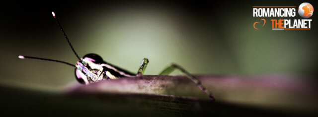 Macro and closeup photography of an insect in Thekkady district of Kerala