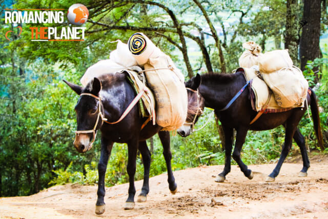 Horses that assist people hike the first stage of Taktshang Goemba