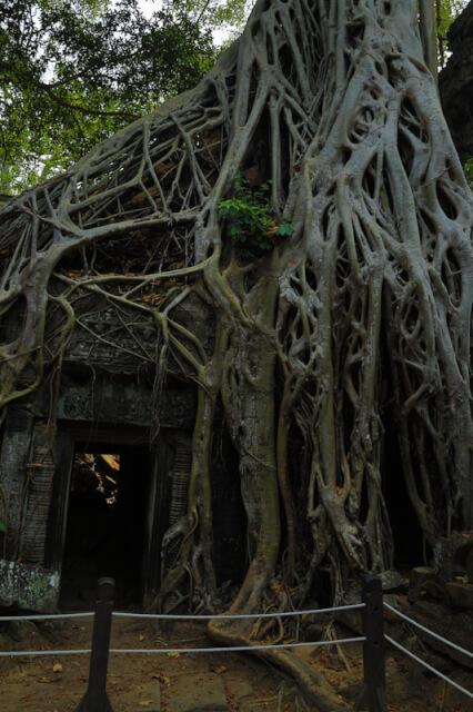 Doorway that has been rooted
