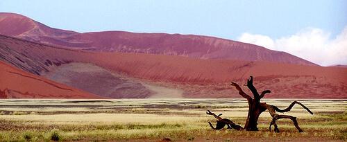 Namib Sand Sea – Namibia