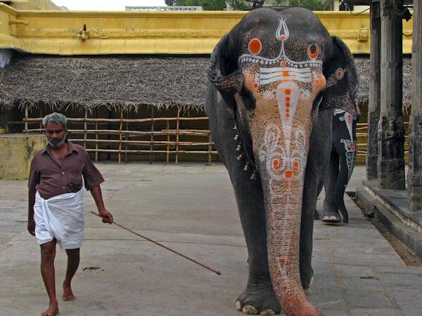 Temple Elephants of India