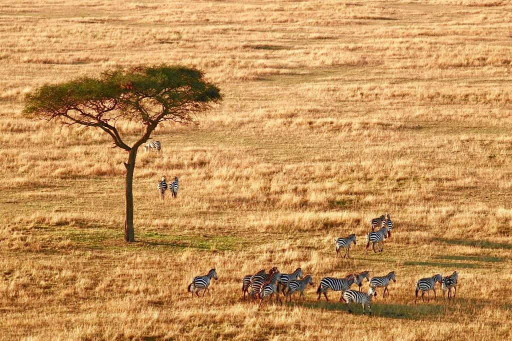 safaris in tanzania