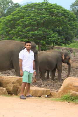 At Pinnawala Elephant Orphanage